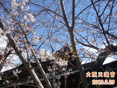 100328_29_sakura_05.jpg