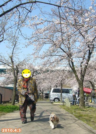 100403_okawa_sakura_01.jpg