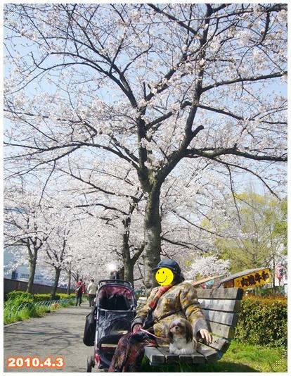 100403_okawa_sakura_06.jpg