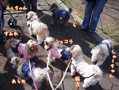 100404_daisen_02.jpg