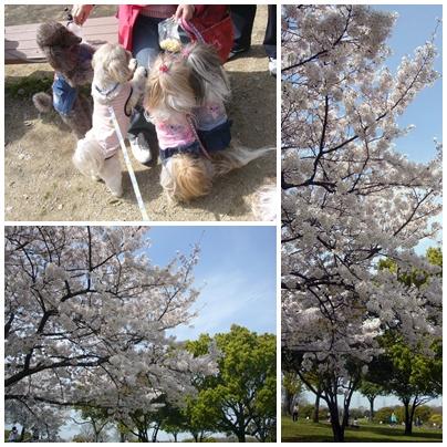 100404_daisen_06.jpg