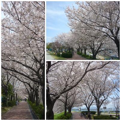 100410_yogogawa_02.jpg