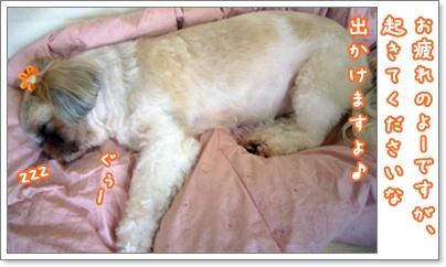 100411_tqc_sango_02.jpg