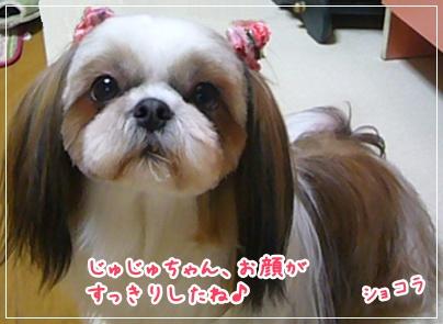 100423_juju_cut_05.jpg