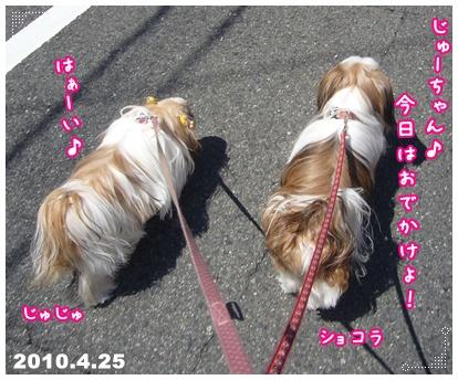 100425_seito_ju_01.jpg