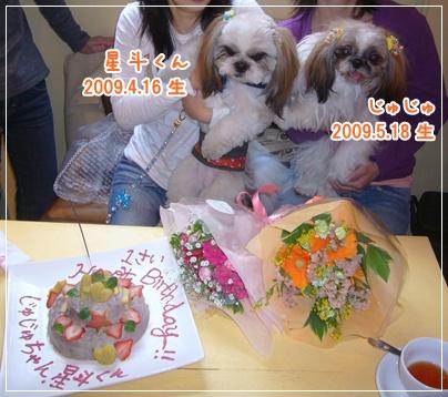 100425_seito_ju_03.jpg