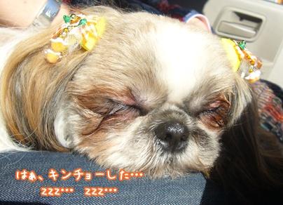 100425_seito_ju_07.jpg