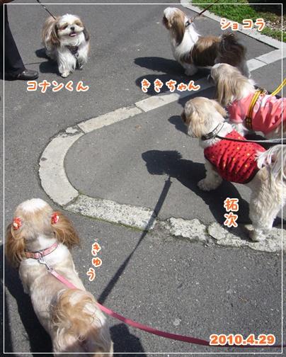 100429_showa_01.jpg