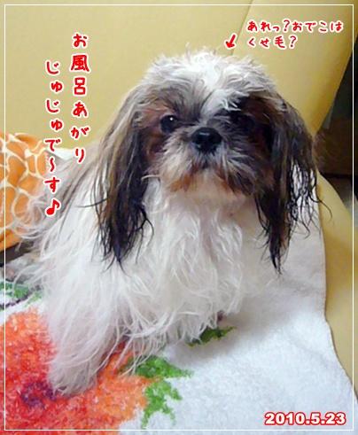 100523_juju_01.jpg