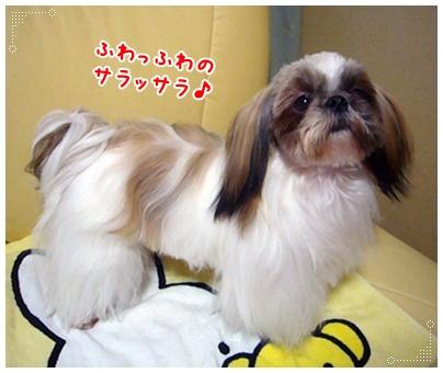 100523_juju_03.jpg