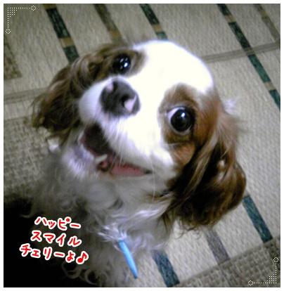 100621_cherry_01.jpg