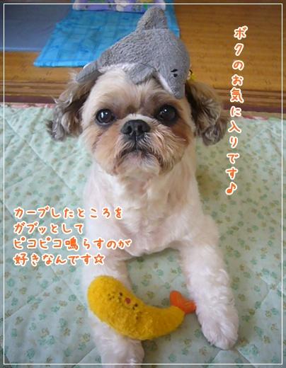100808_wanco_04.jpg