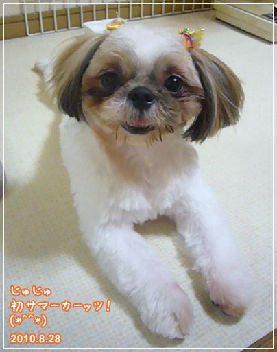 100828_juju_04.jpg
