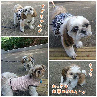 101016_utsubo_03.jpg