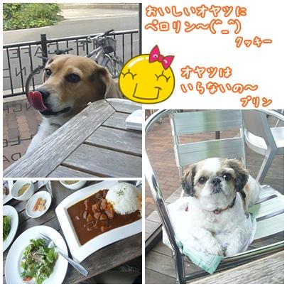 101016_utsubo_04.jpg