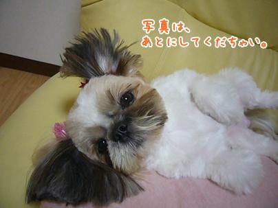 101113_juju_cut_03.jpg