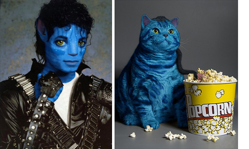 avator Michael Jackson cat