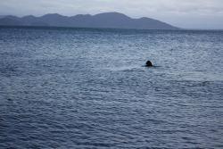 どこまで泳ぐの~?
