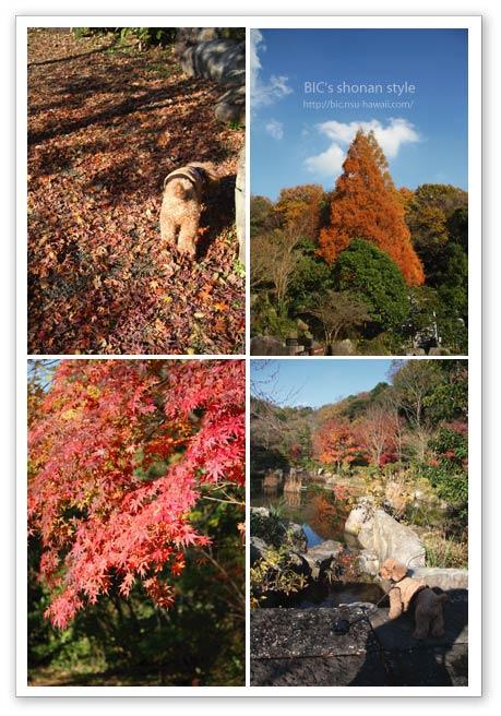金沢自然公園,犬
