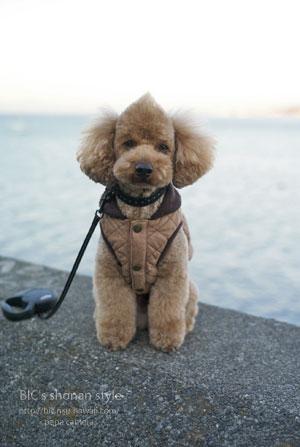 犬,寒さ対策