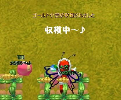 mwo_001金麦収穫中