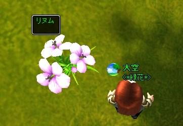 mwo_008リヌム(アマ)