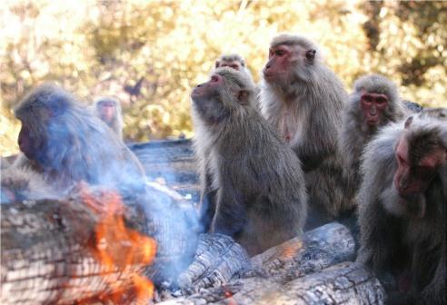 さる 猿 モンキー