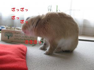 2009_1118_075326-IMG_0716_convert_20091118143115.jpg
