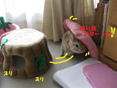 2009_1129_100320-IMG_0885_convert_20091129202745.jpg