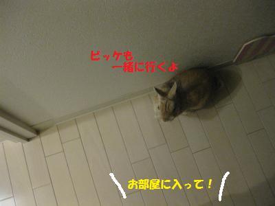 2009_1213_013008-IMG_1211_convert_20091215085205.jpg