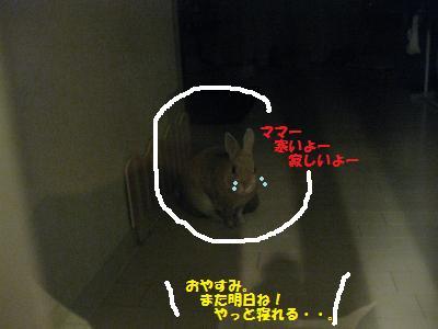 2009_1213_013109-IMG_1214_convert_20091215085821.jpg