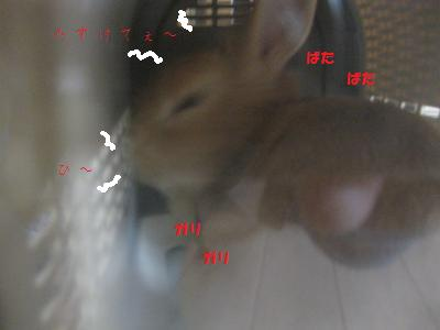 2009_1213_105357-IMG_1234_convert_20091214014559.jpg