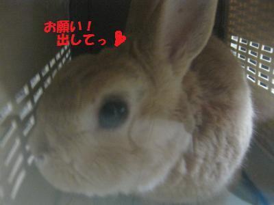 2009_1213_105427-IMG_1237_convert_20091214014904.jpg