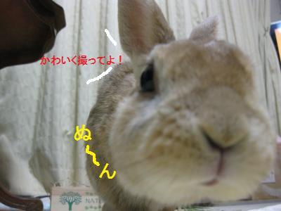 2010_0102_190910-IMG_1581_convert_20100106151651.jpg