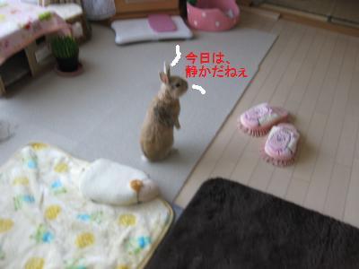 2010_0103_090618-IMG_1586_convert_20100106151349.jpg