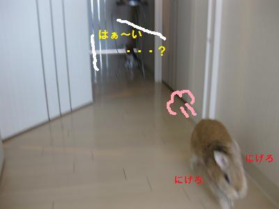 2010_0117_102430-IMG_1995_convert_20100117145236.jpg