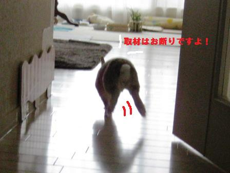 2010_0224_101713-IMG_3086.jpg