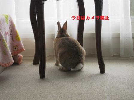 2010_0224_101729-IMG_3081.jpg