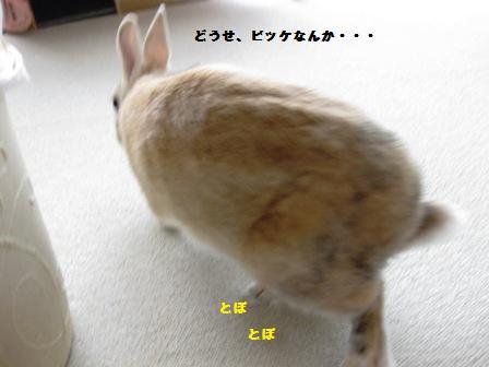 2010_0228_140423-IMG_3184.jpg