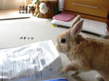 2010_0329_135300-IMG_3951.jpg