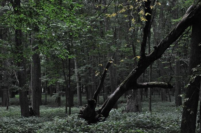 20100801-49.jpg