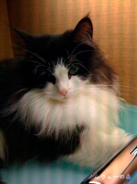 cat006.jpg