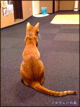 cat007.jpg