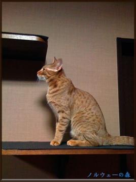 cat008.jpg