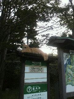 三渓園 猫