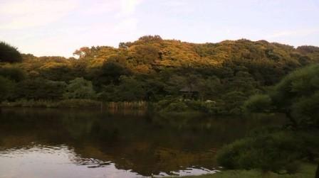 三渓園 池