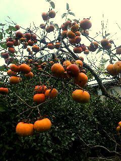 竹中邸秋4柿