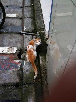 台北 猫01
