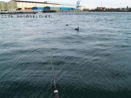 黒鯛11-5