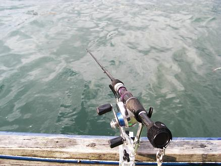 黒鯛15-2 (2)